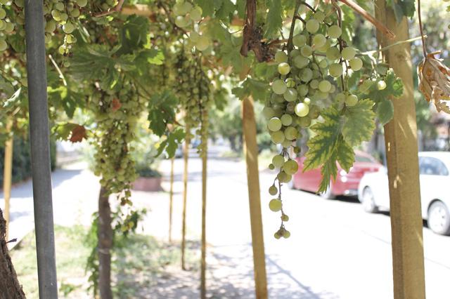 Auch das gibt es in La Reina: Anwohner unterhalten eine Weinlaube (parrón) an der Straße.