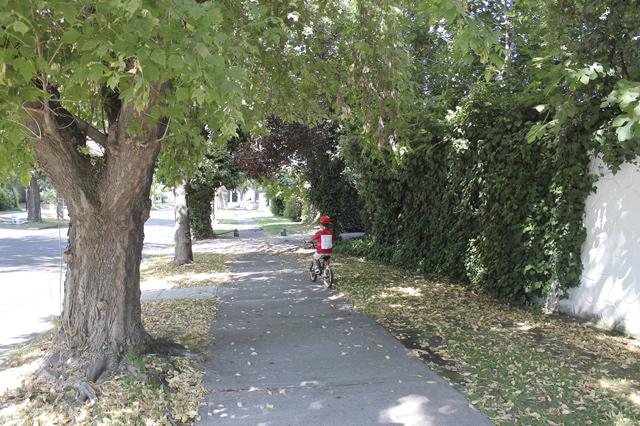 La Reina ist ein grüner Stadtteil. Palmen, Bäume, Büsche und Wiesen prägen das Bild.