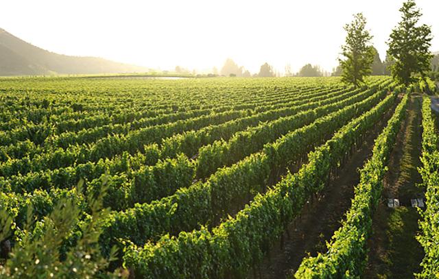 Das Weingut Lafken liegt am Maipo-Fluss südlich von Santiago de Chile